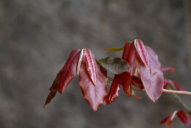 Świezi liście i gałązki zdjęcia royalty free