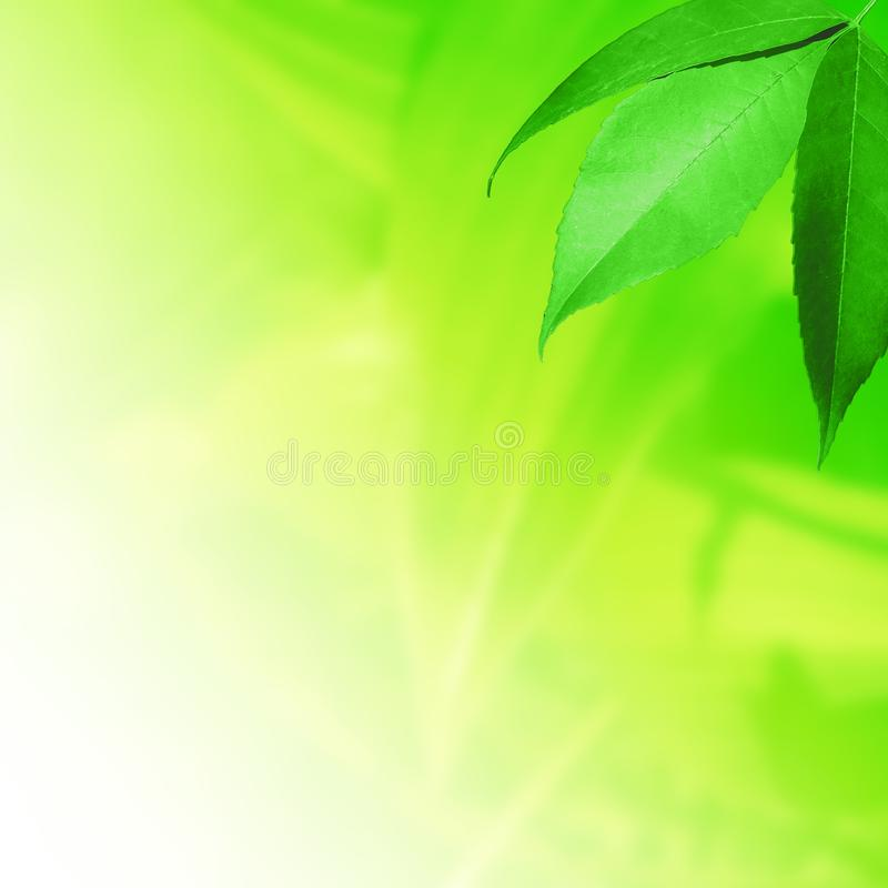 Świezi liście na zieleni zdjęcia royalty free