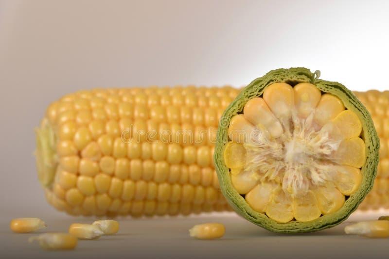 Świezi młodzi kukurydzani cobs obraz stock