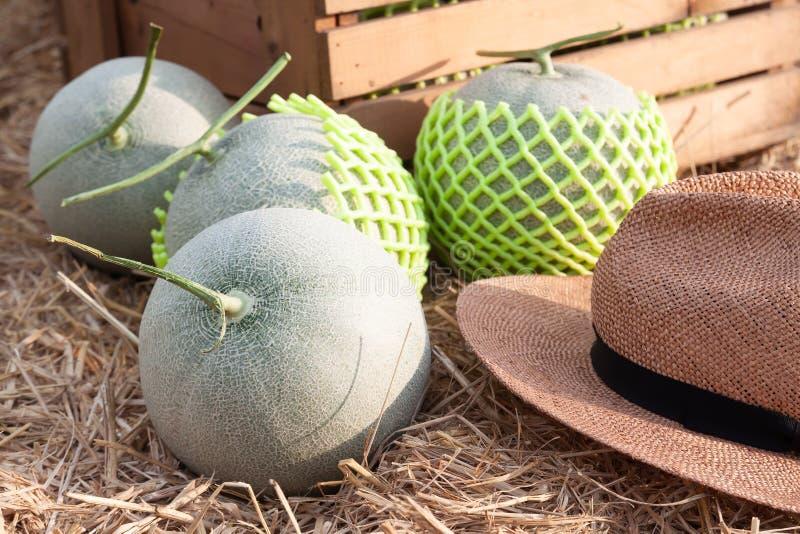 Świezi melony na słomianym dorośnięciu w organicznie gospodarstwie rolnym, Zdrowym obraz stock