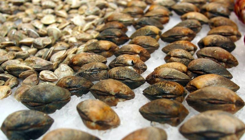 Świezi milczkowie przy hiszpańskim owoce morza rynkiem zdjęcia stock