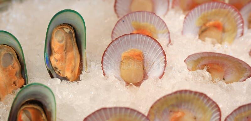 Świezi Mussels i przegrzebek na lodzie fotografia royalty free