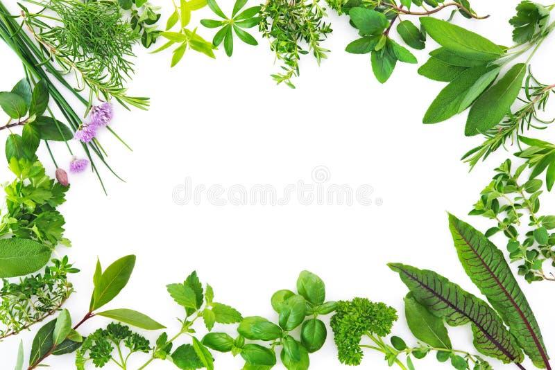 Świezi ogrodowi ziele odizolowywający na białym tle obraz royalty free