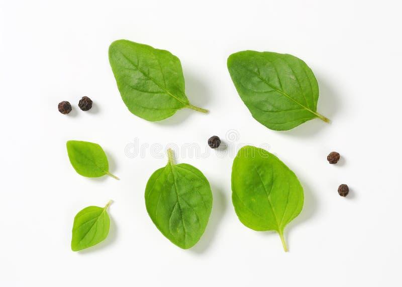 Świezi oregano liście, peppercorns i zdjęcie royalty free