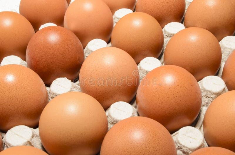 Świezi organicznie jajka w jajecznym pudełku zdjęcia stock