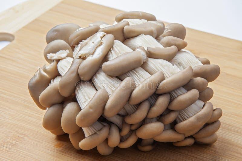 Świezi ostrygowej pieczarki grona rozkładający na naturalnej bambusowej tnącej desce obraz royalty free