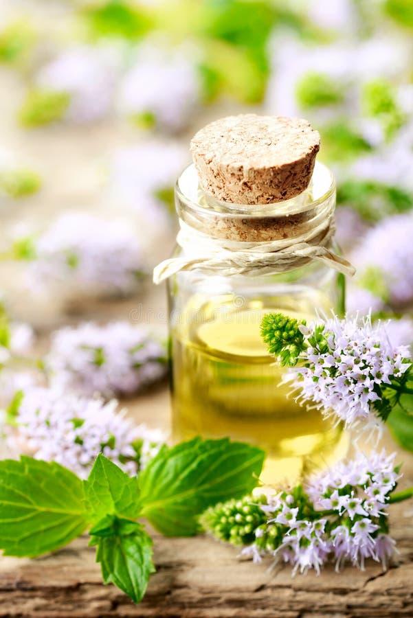 Świezi purpurowi miętówka kwiaty i miętówka istotny olej na drewnianym stole obraz stock