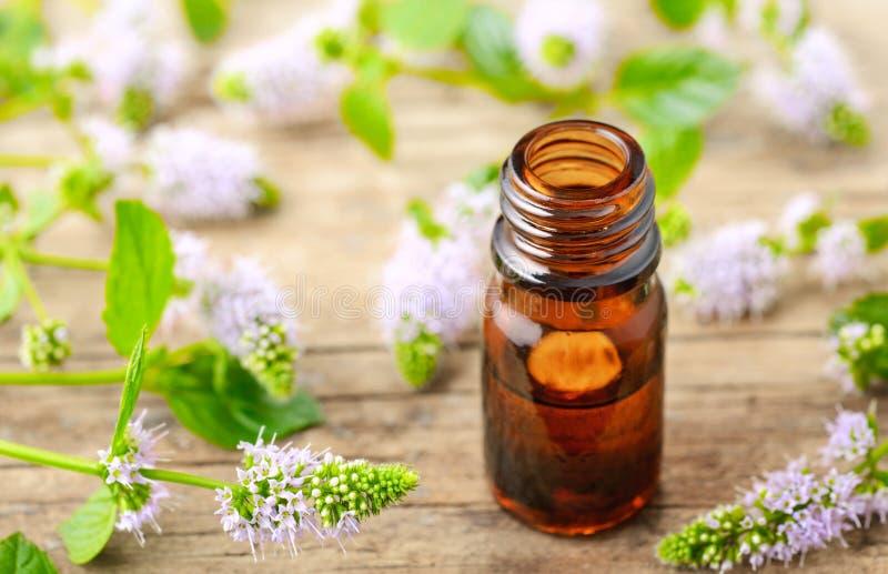 Świezi purpurowi miętówka kwiaty i miętówka istotny olej na drewnianym stole zdjęcie royalty free