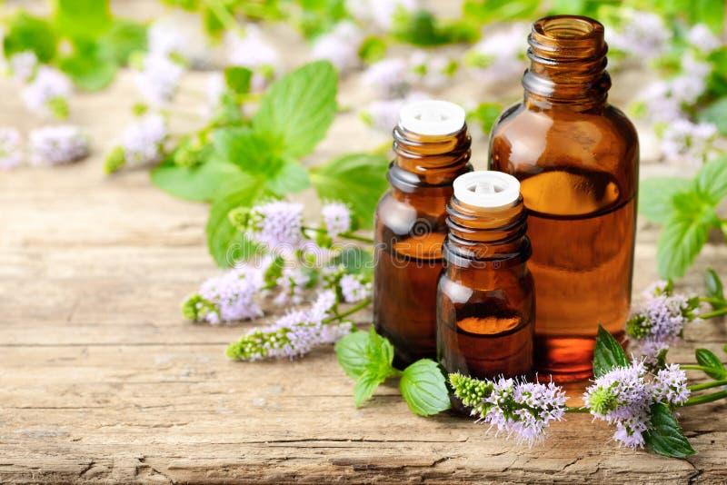 Świezi purpurowi miętówka kwiaty i miętówka istotny olej na drewnianym stole zdjęcia royalty free