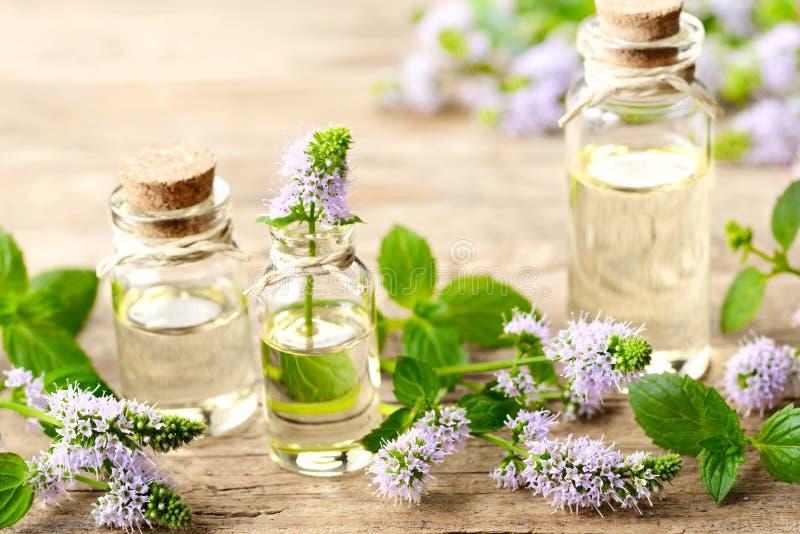 Świezi purpurowi miętówka kwiaty i miętówka istotny olej na drewnianym stole obrazy stock