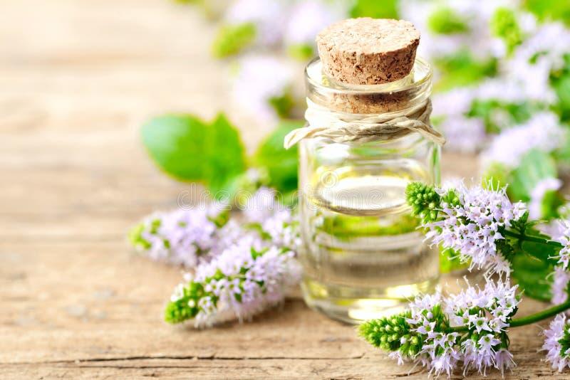 Świezi purpurowi miętówka kwiaty i miętówka istotny olej na drewnianym stole fotografia stock