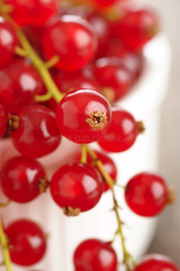 Świezi redcurrants w pucharze zdjęcia royalty free