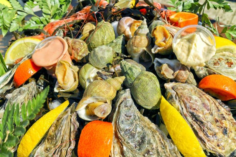 Świezi shellfish, ostryga, ślimaczka lunchu wyśmienity półmisek fotografia stock