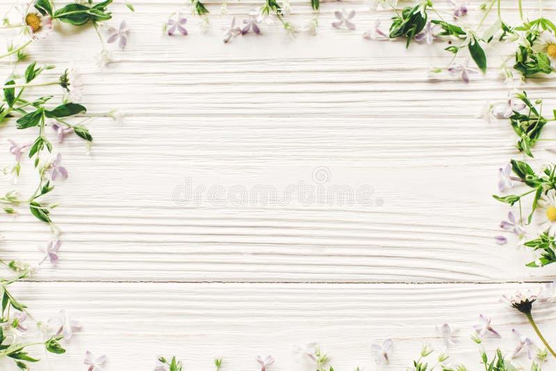Świezi stokrotka bzu kwiaty i zielona ziele rama na biały drewnianym obraz royalty free