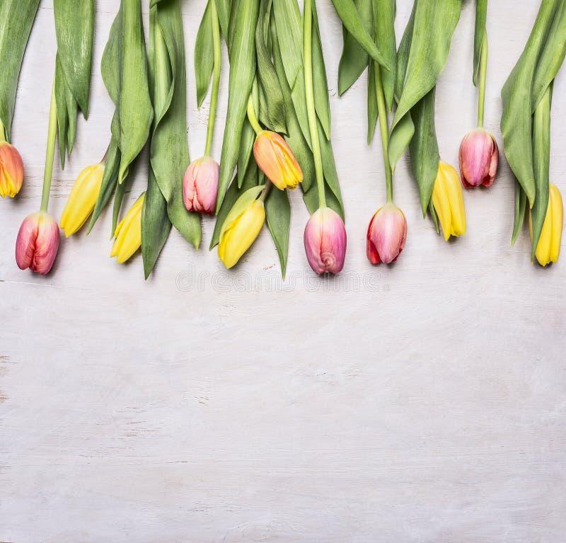 Świezi stubarwni tulipany, wiosna, kwiaty graniczą, umieszczają dla teksta na drewnianym nieociosanym tło odgórnego widoku zakońc obraz stock