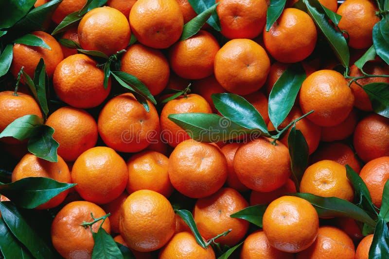 Świezi tangerines z trzonami i liśćmi, dla sprzedaży przy rynkiem fotografia royalty free