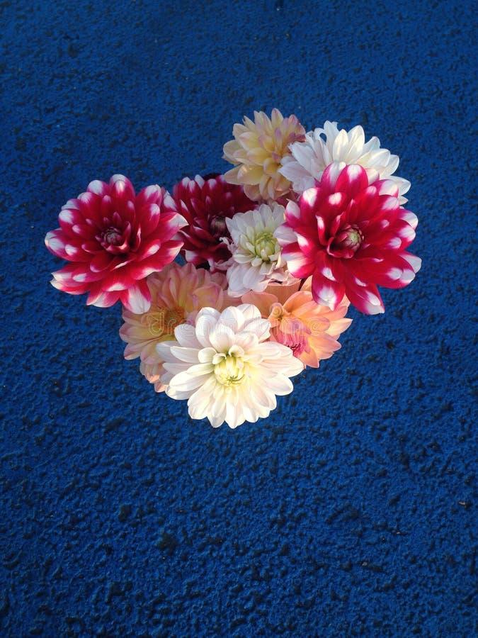 Świezi ukradzeni kolorowi kwiaty zdjęcia stock