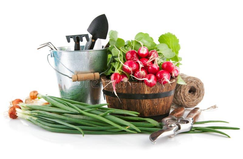 Świezi warzywa z ogrodowymi narzędziami fotografia stock