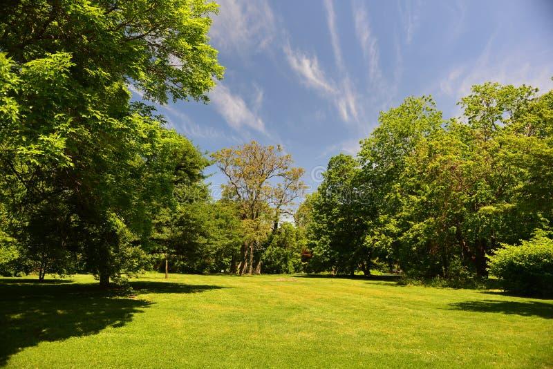Świezi wczesnych lat drzewa, trawa i niebieskie niebo obrazy royalty free