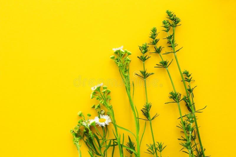 Świezi wildflowers na żółtym tle, przestrzeń dla teksta fotografia royalty free