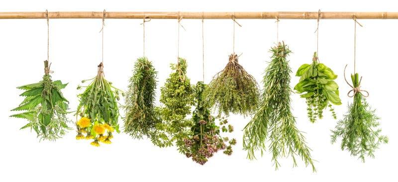 Świezi ziele kopery, basil, rozmaryn, macierzanka, oregano, lebiodka, Dan fotografia stock