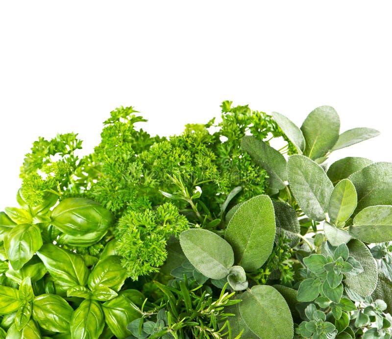 Świezi ziele nad białym tłem karmowi zdrowi składniki zdjęcie stock