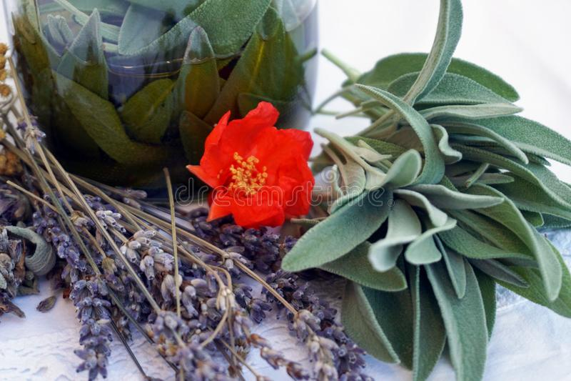 Świezi ziele od ogródu dla istotnego oleju lub macerują przygotowanie obrazy royalty free