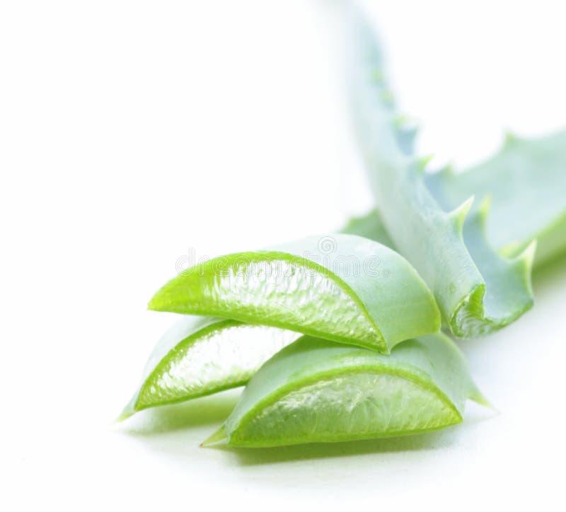 Świezi zieleni liście aloes Vera obraz stock