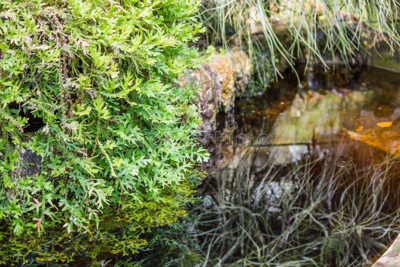 Świezi zieleni liście paproć obrazy royalty free