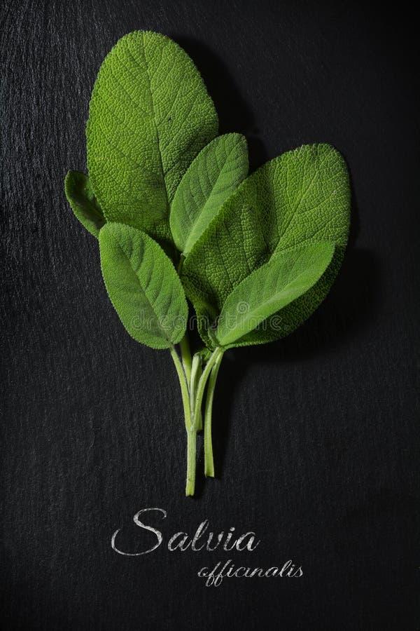 Świezi zieleni mądrzy liście na zmroku łupku talerzu, próbka tekst Salvi zdjęcie royalty free