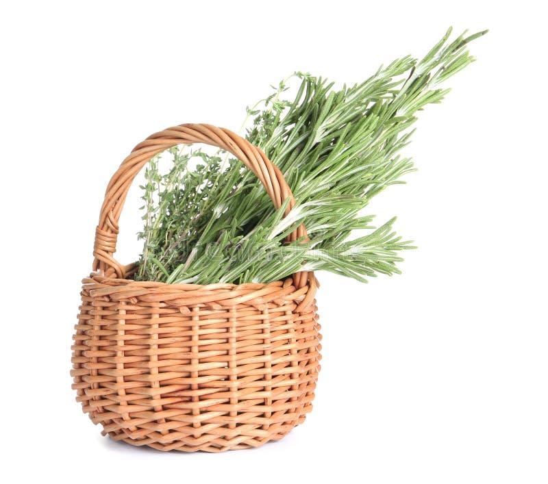 Świezi zieleni rozmaryny i macierzanka w łozinowym koszu na białym tle zdjęcie royalty free