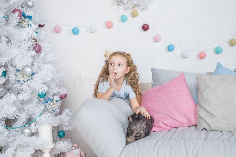 Świnia jako symbol szczęście i chińczyk 2019 nowy rok kalendarz Śliczna śmieszna dziewczyna zaskakuje o A dziecka świni na kanapi obrazy royalty free