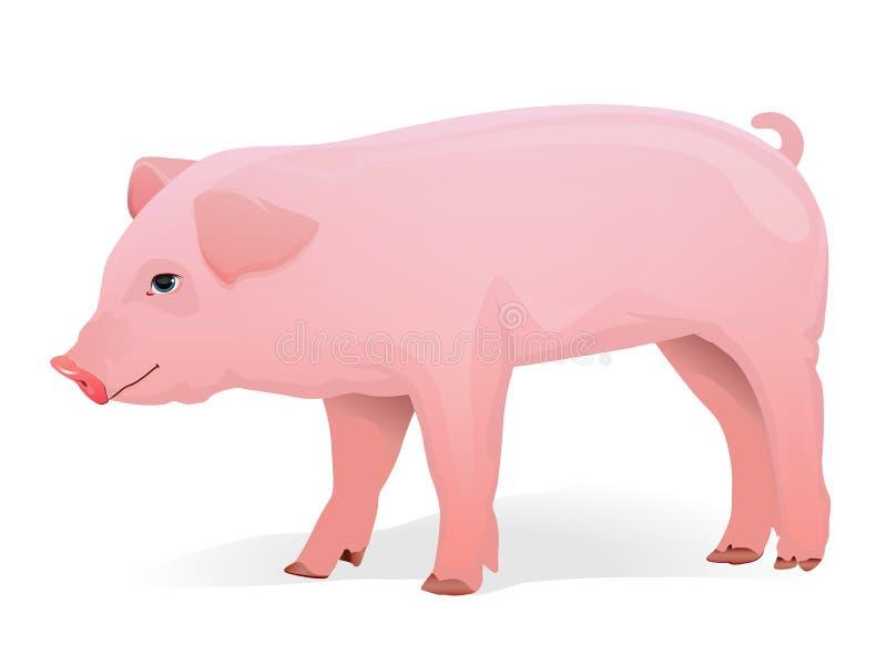 świnia szczegółowy wektor ilustracji