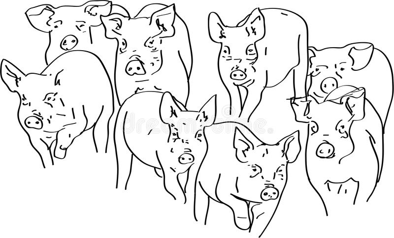 Świnie royalty ilustracja