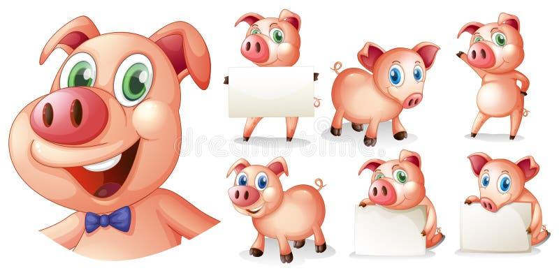 Świnie w różnych pozycjach ilustracja wektor