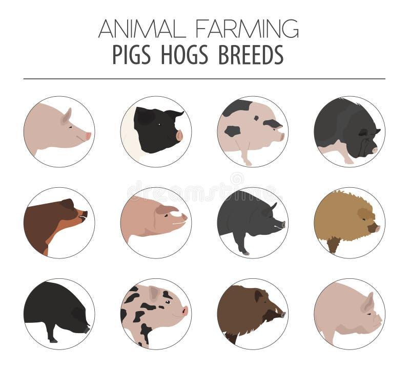Świnie, wieprza trakenu ikony set Płaski projekt ilustracja wektor