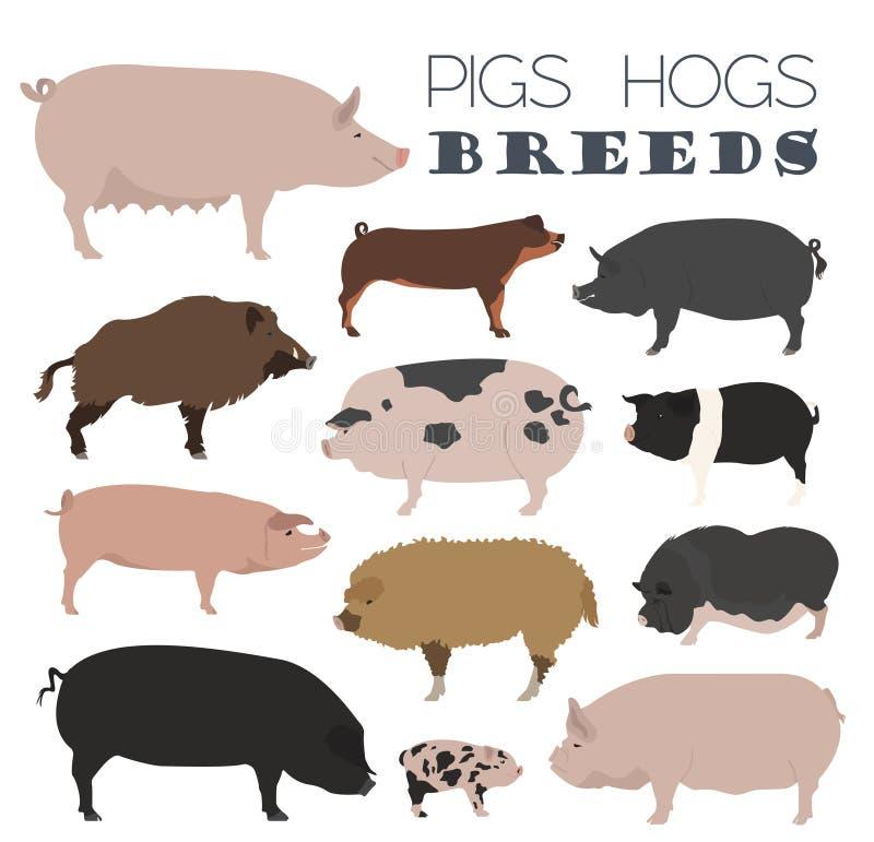 Świnie, wieprza trakenu ikony set Płaski projekt royalty ilustracja
