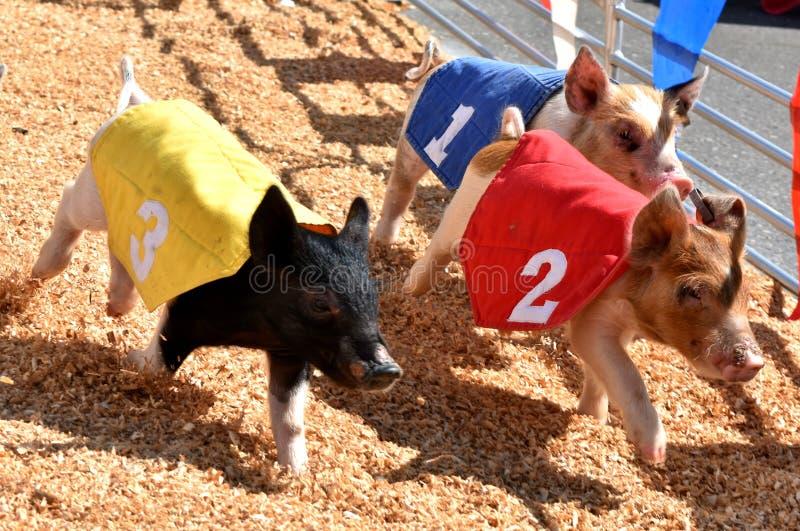 Świniowaty ścigać się przy Oklahoma stanu Uczciwymi ziemiami, Oklahoma miasto obrazy royalty free
