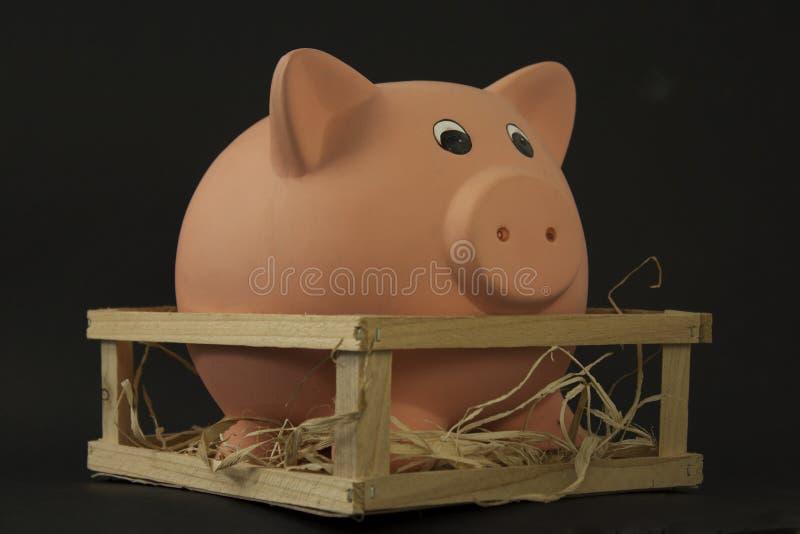 świniowaty prosiątko fotografia stock
