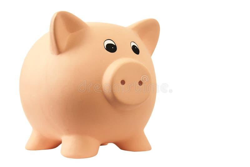świniowaty prosiątko zdjęcia royalty free