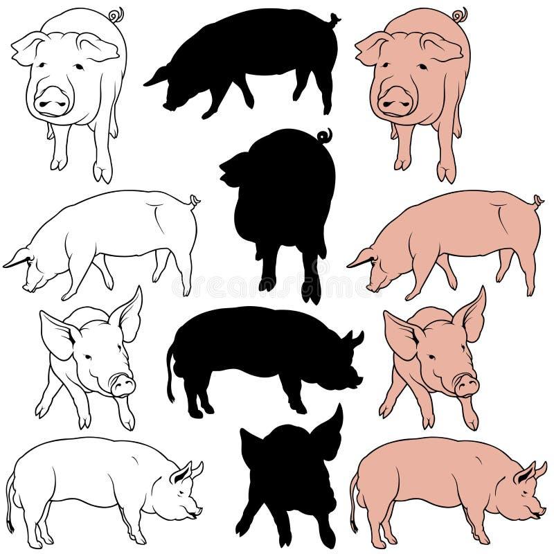świniowaty set royalty ilustracja