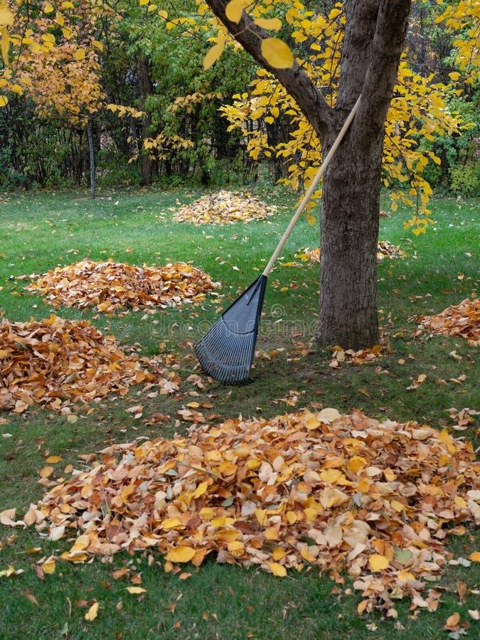 Świntuch Odpoczywa Przeciw drzewu z liści stosami fotografia royalty free