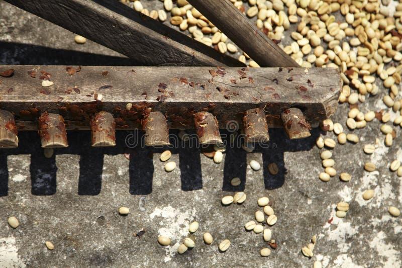 Świntuch używać dla zakłócać Kawowe fasole zdjęcia royalty free