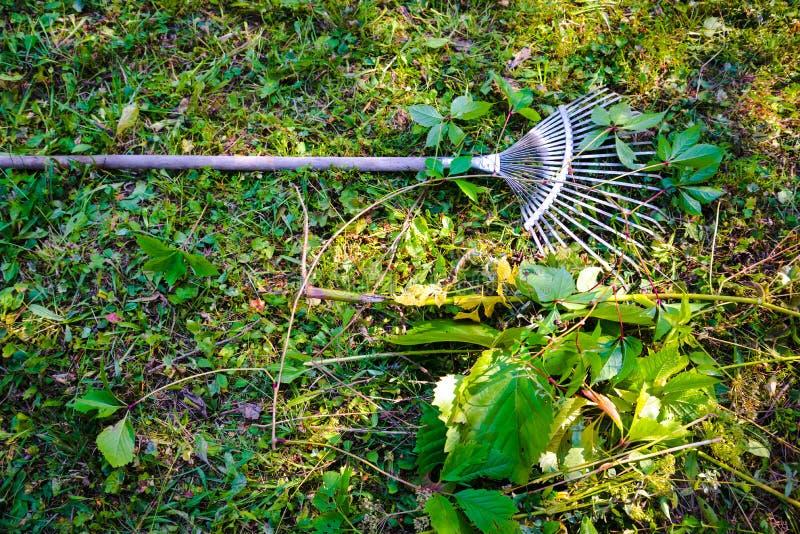 Świntuch z rozsypiskiem świrzepy i ogród rozgałęzia się fotografia stock