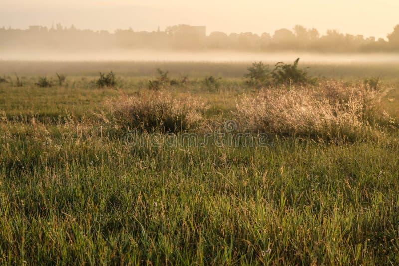 Świt na dzikim polu Piękny krajobraz na wschód słońca zdjęcia royalty free