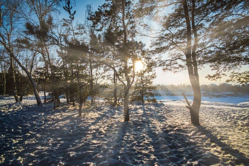 Świt w lesie zimowym zdjęcie stock