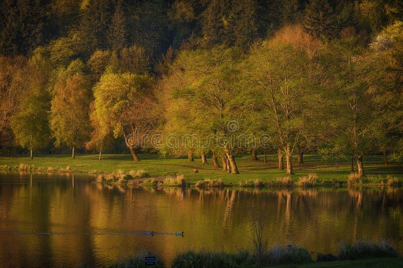 Świtu światło wzdłuż jezioro brzeg fotografia stock