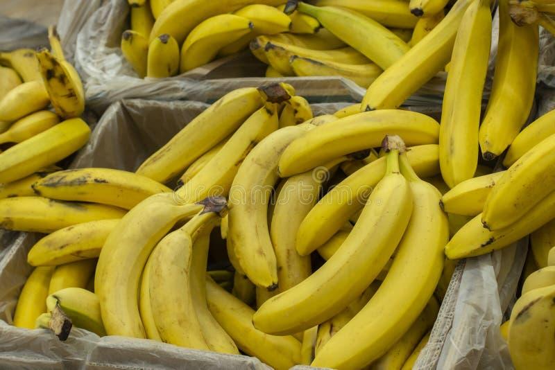 Żółci banany w pudełkach w supermarkecie Egzotyczna owoc w supermarkecie, wiązka banan fotografia stock