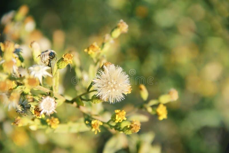 Żółci i biali kwiaty na tle zieleni liście obrazy royalty free