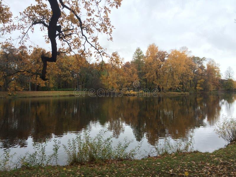 Żółci i czerwoni drzewa w St Petersburg fotografia stock